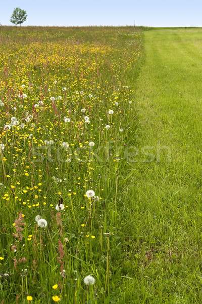 partly mowed flowering meadow Stock photo © prill