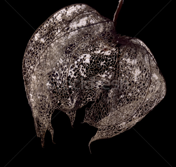 Rot chinese lantaarn blaas kers zwarte Stockfoto © prill