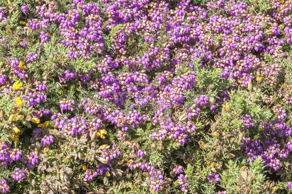 Kolorowy roślinność szczegół około krajobraz lata Zdjęcia stock © prill