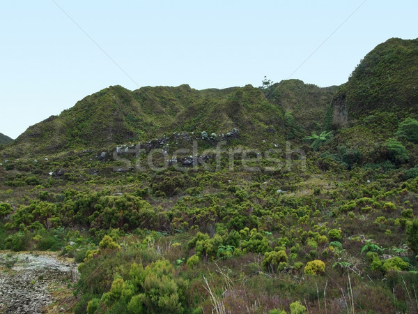 overgrown hills Stock photo © prill