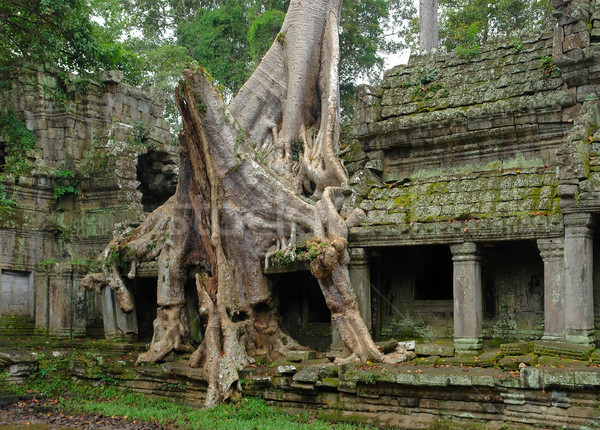 Ta Prohm Stock photo © prill
