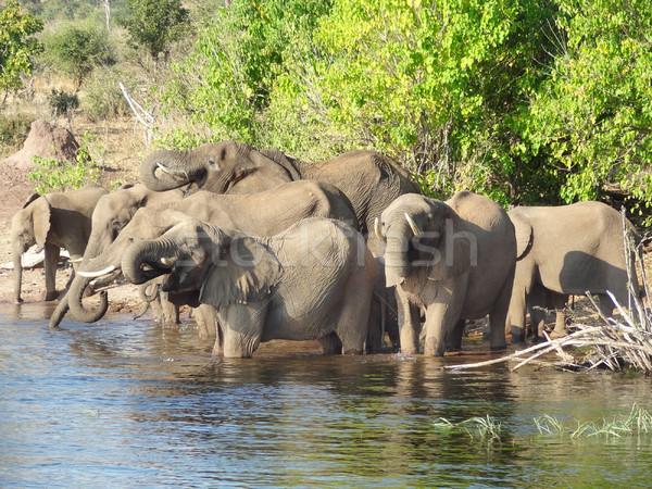 Stok fotoğraf: Grup · filler · Botsvana · manzara