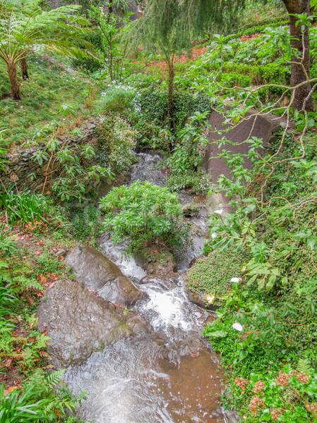 Sziget Madeira növényzet díszlet virág víz Stock fotó © prill