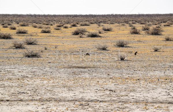 пейзаж Намибия песчаный саванна декораций Африка Сток-фото © prill