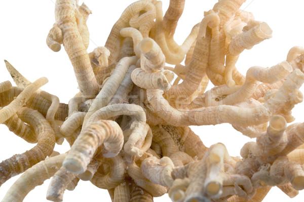 Worm detail licht bruin witte Stockfoto © prill