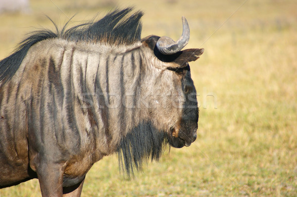Botswana szavanna díszlet Afrika természet szafari Stock fotó © prill