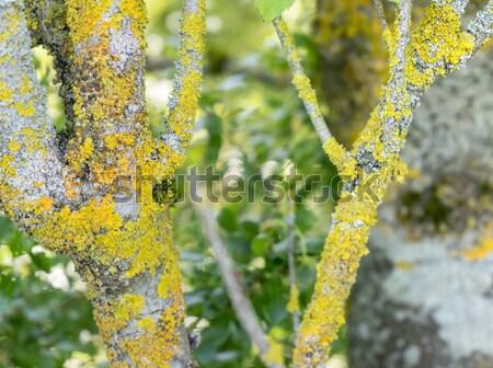 стебель природного подробность древесины аннотация Сток-фото © prill