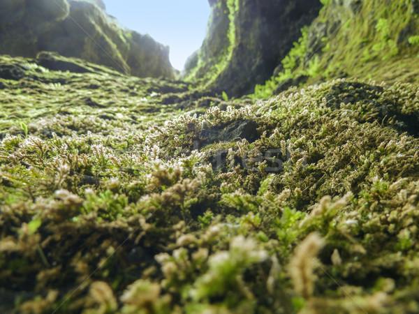 Vegetatie IJsland detail grond natuur blad Stockfoto © prill