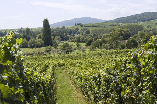 Alsace scenery Stock photo © prill
