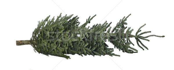 christmas tree on the ground Stock photo © prill