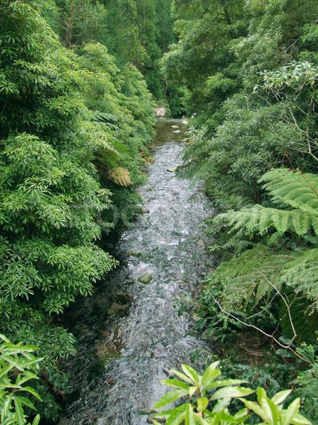 Wenig Stream Vegetation Insel Archipel Stock foto © prill