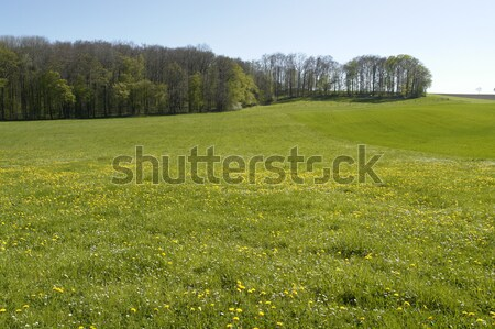 flowery meadow in Hohenlohe Stock photo © prill