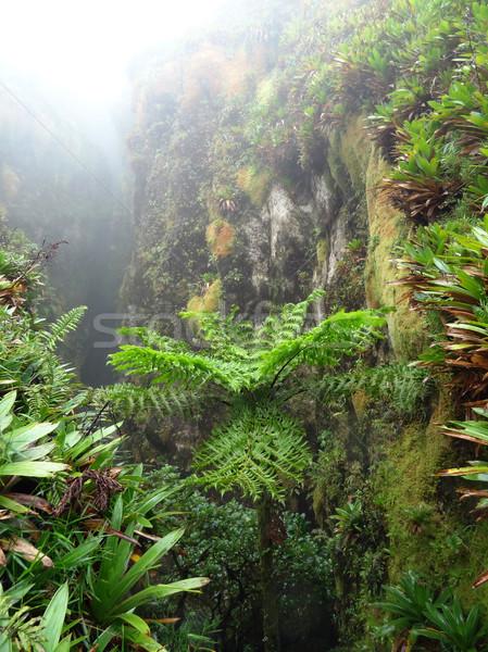 экзотический растительность туманный декораций Карибы острове Сток-фото © prill