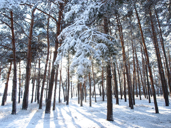 Nieve rama naturaleza invierno paisaje frío Foto stock © Pruser