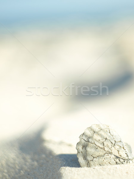 Edad mar concha fuera arena Foto stock © Pruser
