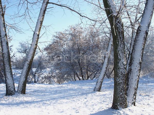 árboles nieve naturaleza sol cielo abedul Foto stock © Pruser