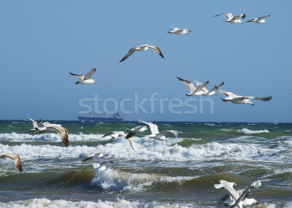 Seascape in a storm Stock photo © Pruser