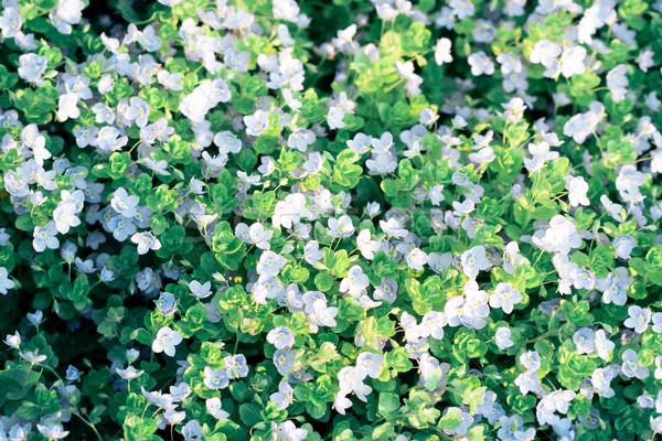 Alan kır çiçekleri üst görmek küçük çim Stok fotoğraf © przemekklos