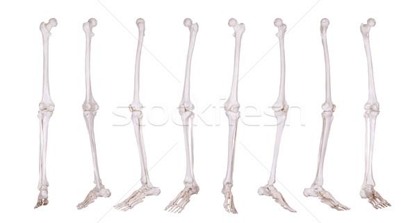 подробность скелет ногу больницу медицина науки Сток-фото © pterwort