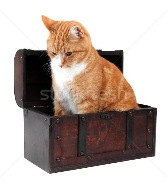 Stock photo: pet in treasure chest