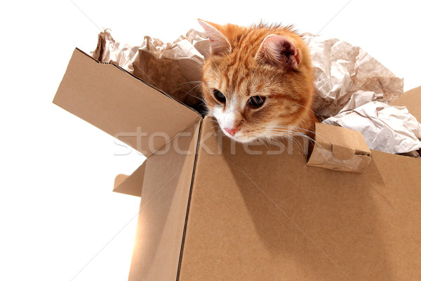 cat in removal box Stock photo © pterwort