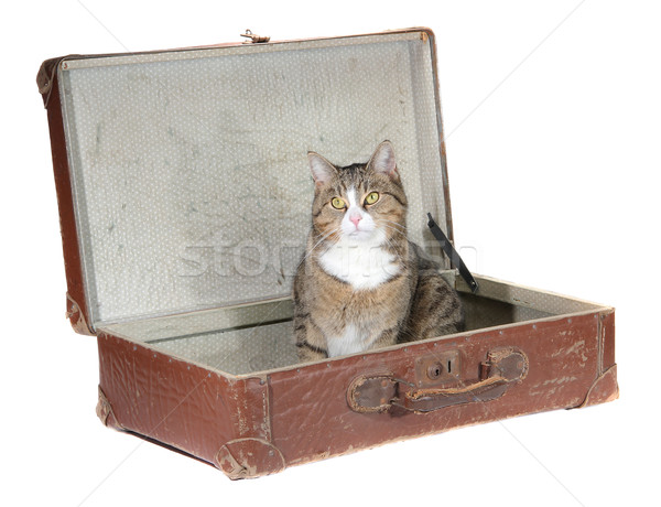little cat sitting in old suitcase Stock photo © pterwort