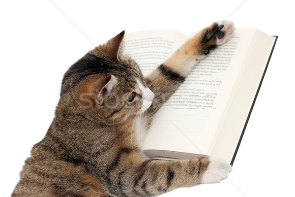 cute little cat reading a book Stock photo © pterwort