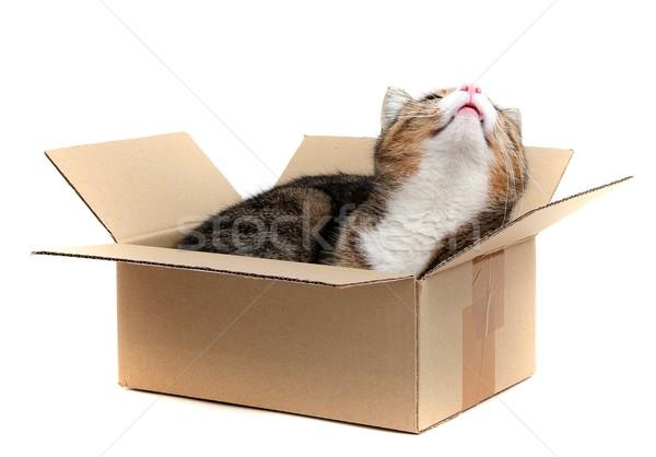 little cat in paperbox Stock photo © pterwort