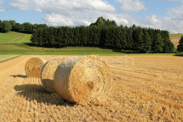 bale of straw in front of forest Stock photo © pterwort