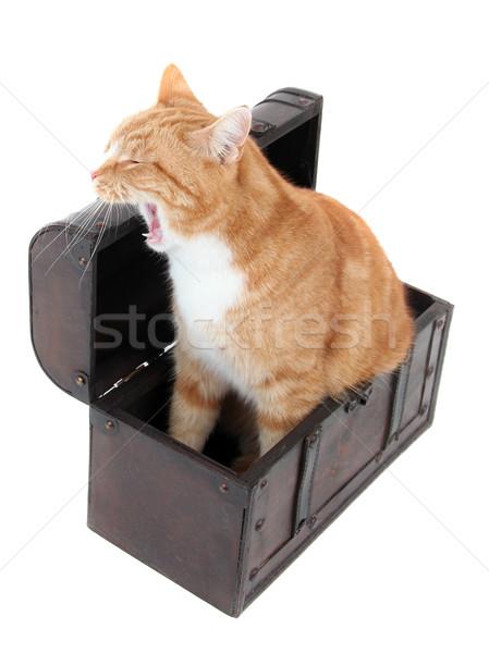 Fáradt kincsesláda macska állat édes mellkas Stock fotó © pterwort