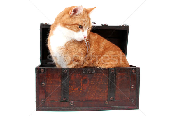 édes piros macska kincsesláda állat Stock fotó © pterwort