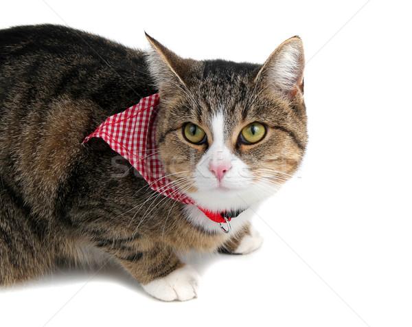 édes kicsi macska fejpánt fehér szemek Stock fotó © pterwort