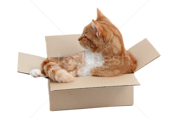 snoopy tomcat in removal box Stock photo © pterwort