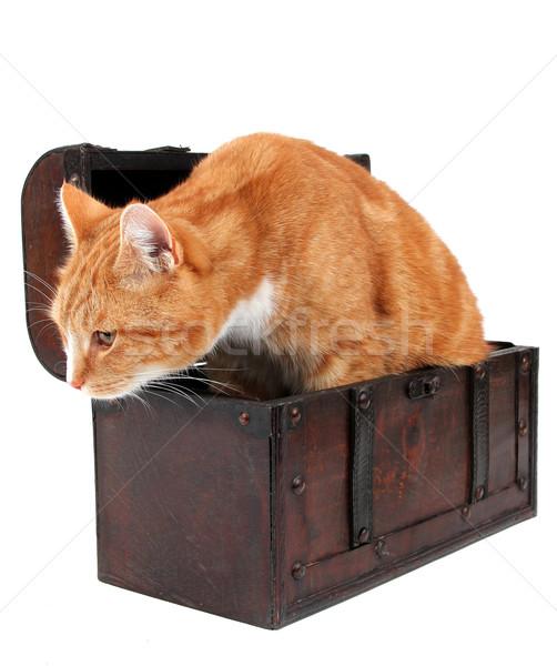 tomcat in chest Stock photo © pterwort