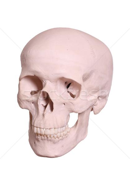 頭蓋 男 健康 薬 死 頭蓋骨 ストックフォト © pterwort