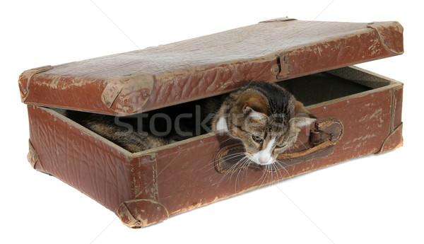 Díszállat öreg bőrönd fehér nyár fiatal Stock fotó © pterwort