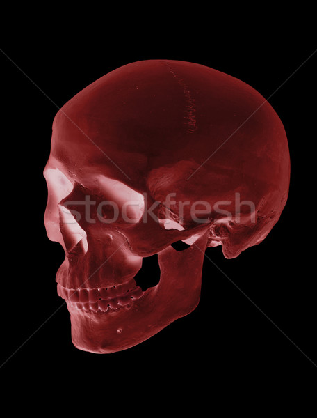 孤立した 赤 頭蓋 顔 男 医療 ストックフォト © pterwort