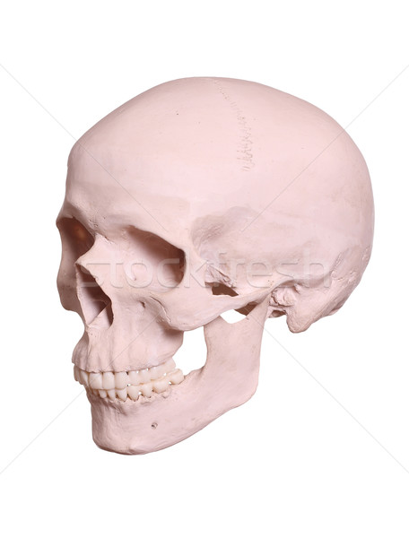 孤立した 頭蓋 男 健康 薬 死 ストックフォト © pterwort