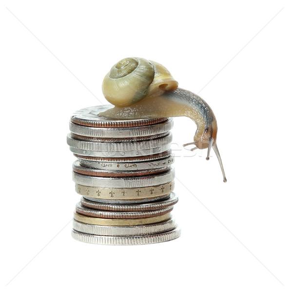 Salyangoz para ev soyut doğa dizayn Stok fotoğraf © pterwort