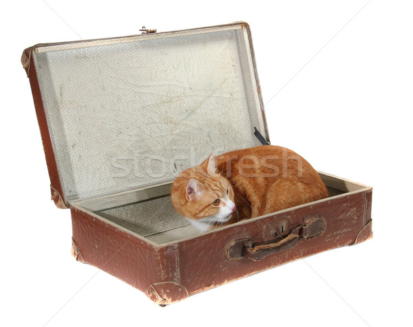 cute tomcat in old brown suitcase Stock photo © pterwort