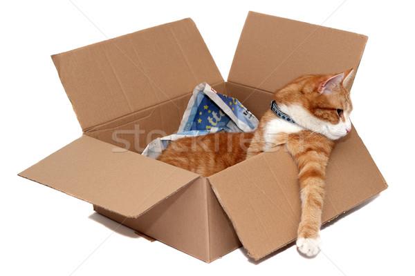 удаление окна бумаги кошки поиск Сток-фото © pterwort