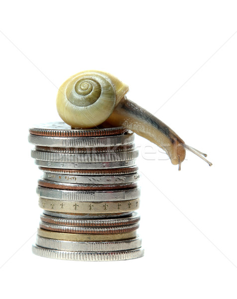 snail on top of coins Stock photo © pterwort