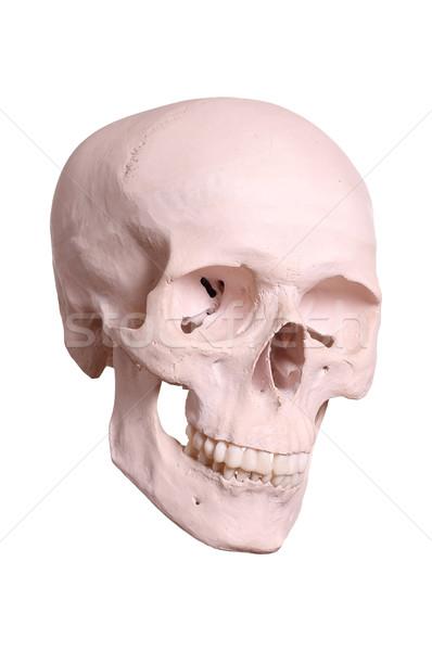 череп человека здоровья медицина смерти Сток-фото © pterwort