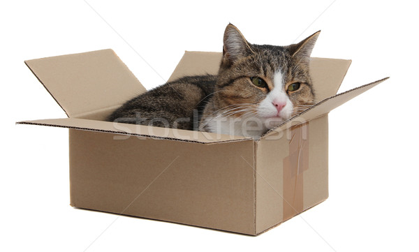 snoopy cat in removal box Stock photo © pterwort