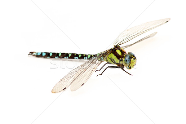 dragonfly Stock photo © pterwort