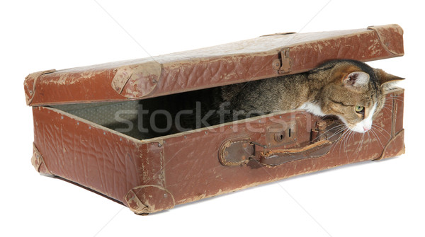 hungry pet in old brown suitcase Stock photo © pterwort