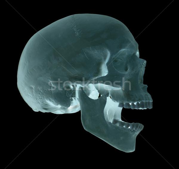 spooky screaming blue skull Stock photo © pterwort