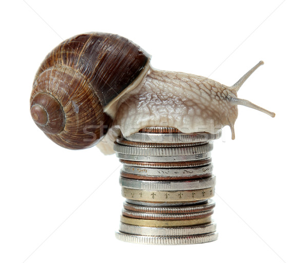snail with coins Stock photo © pterwort