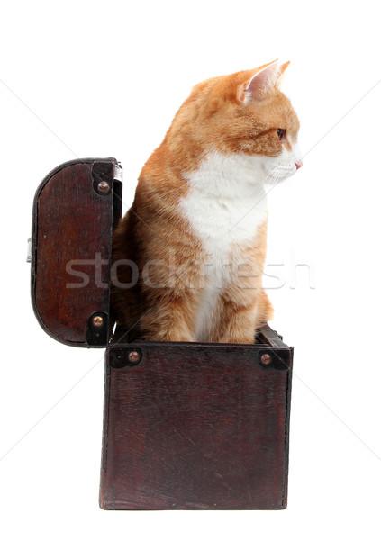 snoopy tomcat in treasure chest Stock photo © pterwort