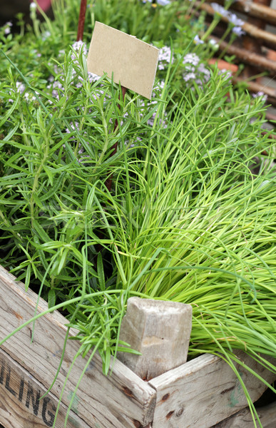 fresh rosemary on farmer's market Stock photo © pterwort